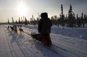 Mushers,Sled dogs,and Sleds