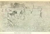 What slaves did in the field