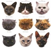 species of cats