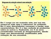 Diagrama da seleção natural com mutações
