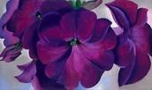 Petunias (1925)