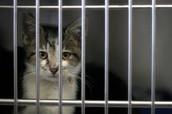 cat caged