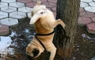 http://manwiththemuckrake.wordpress.com/2009/10/05/bitch-dog-territorial-marking/