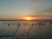 Florida Lakes Ecosystem