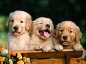 PUPPIES!!!!!!!!!!