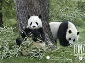Par pandi za ručkom.
