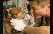 A Veterinarian Engineer researching and studing the puppy