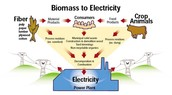 How we get electricity from biomass