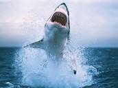 help stop killing sharks