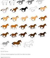 meny tipes of horses