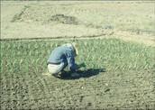 Peru's natural resources