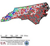 Fire ants in North Carolina.