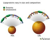 What is LDL and HDL?