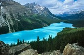 Lac Peyto à Banff , Alberta