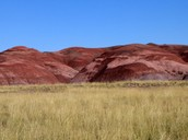 Grassland in Petrified Forest