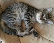 First Hand Account Kitten Behaviors