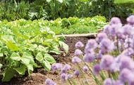 Build a garden