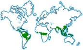 Where rainforests are located