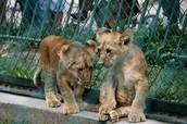 Parque Zoologico de caricuao