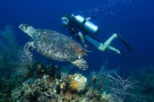 Cool things to do in Barbados like scuba dive etc.