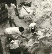 Excavation site 2