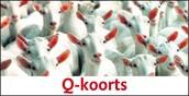 Q-koorts