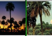 ¨ Parque Nacional El palmar¨