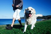 Cheapest dog walking business in America!