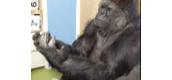 Koko demand cest ou All Ball?