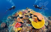 Scuba diving lessons in the Coral reef