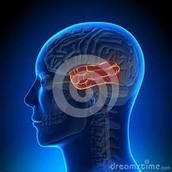 Traumatic Brain Injury Treatment