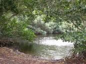 swamp wetlands
