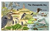 The Chesapeake Bay wildlife