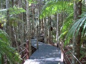 Sea Acres is A Rain Forest that is Thousands of Years Old!!