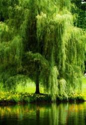 Singing Trees