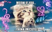 Why I love kittens!!!!!!