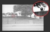Perspective 2 - The Grassy Knoll