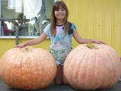 A big thank you to all of you that entered our Pumpkin growing competition