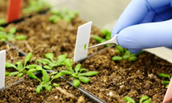 soil and plant scientists