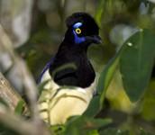 Un pájaro de Iguazú
