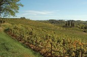 Buttrio's vineyards