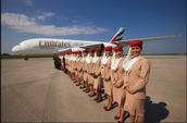 Flight attendants and plots