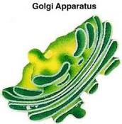 Golgi Appartatus