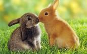 גם לארנבים יש רגשות