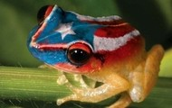 The Animal that represents Puerto Rico?