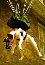 Hollowing hounds bungee jumping🐶🐶🐶💯💯