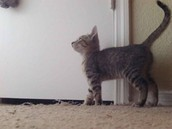 Patrick's kitty!