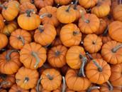 Vitamins in Pumpkins