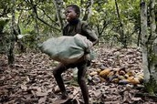 60% of child laborers work in Agriculture