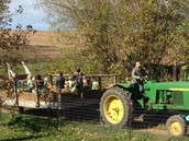 At Sutter's Ridge, pumpkin patch and orchard